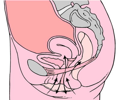 Kegel exercises diagram